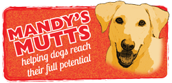 Mandy's Mutts: helping dogs reach their full potential | classes, training walks, and consultations